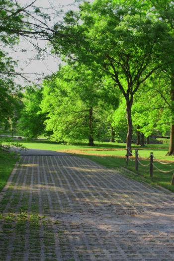 Path in a park