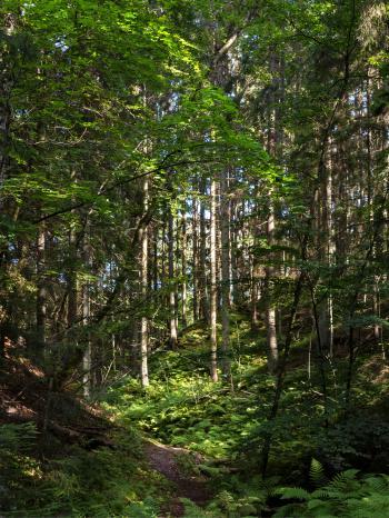 Path to a sunny patch in Gullmarsskogen ravine 3