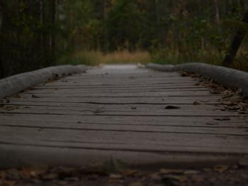 Path with wooden bridge