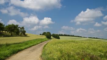 Pathway in Between of Green Grass Field