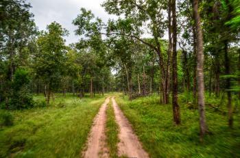 Pathway Near Tree