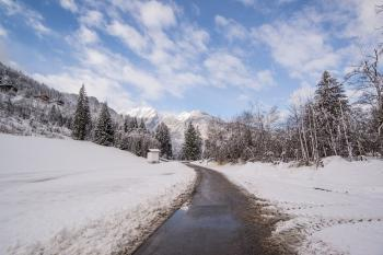 Pavement Road Surrounded by Snow and Pine Trees