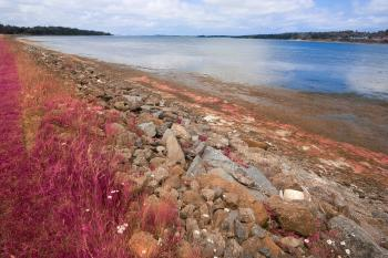 PEI Coastal Scenery - Pastel Pink HDR