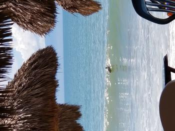Pelican at Bucerias