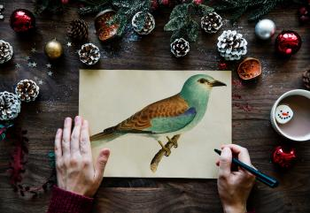 Person Drawn Green and Brown Budgerigar