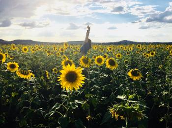 Person in Blue Shirt on Sunflower Field Photo Shot