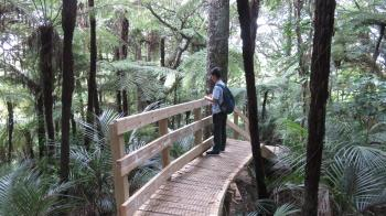 Person on Wooden Bridge Surrounded By Trees