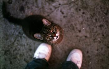 Pet me, NOW!