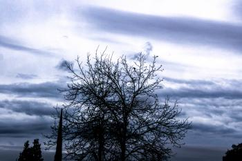Photo of a Bare Tree Under Cloud Sky