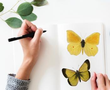 Photo of a Person Drawing a Butterfly