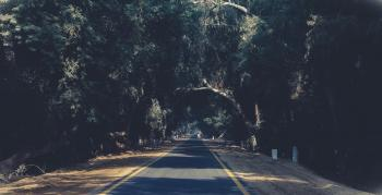 Photo of Asphalt Road Between Trees