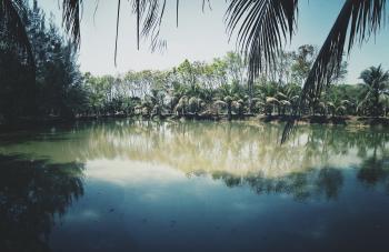 Photo of Coconut Trees Near Lake