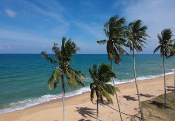 Photo of Coconut Trees on Beach