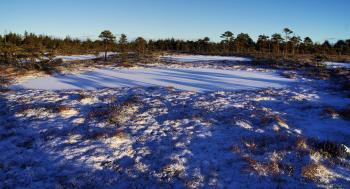Photo of Field Covered With Snow