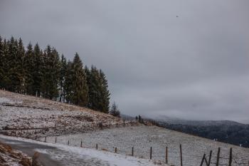Photo of Field Near Green Trees