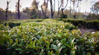 Photo of Green Plants Near Leafless Tree