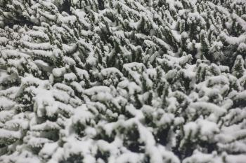 Photo of Plant With Covered With Snow