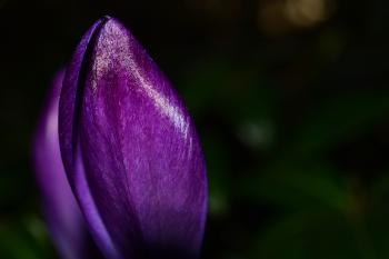 Photo of Purple Petaled Flower