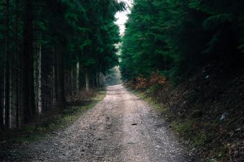 Photo of Road in Forest