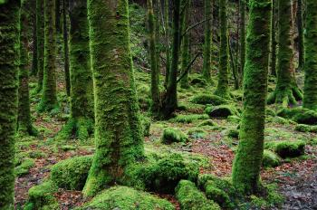 Photo of Trees Covered in Moss