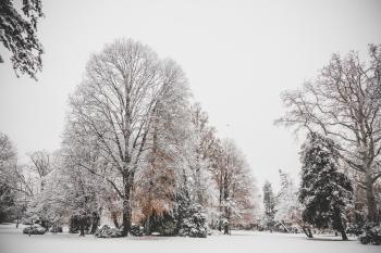 Photo of Trees Covered of Snow