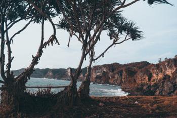 Photo of Trees Near the Sea