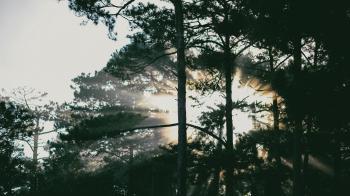 Photo of Tress at Sunrise