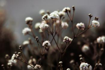Photo of White Flower Buds
