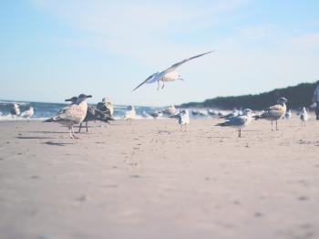 Photo Ofgseagulls
