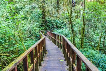 Photograph of Brown Wooden Bridge