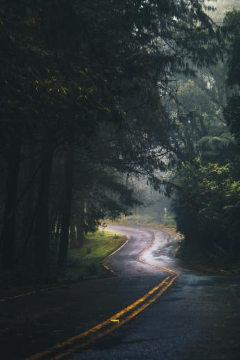 Photography of Asphalt Road Near Trees