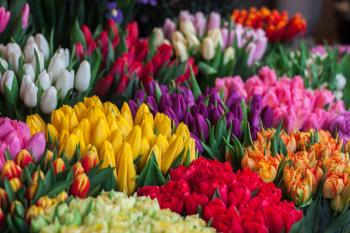 Photography of Assorted Colored Tulips