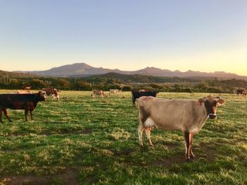 Photography of Cows On Green Field