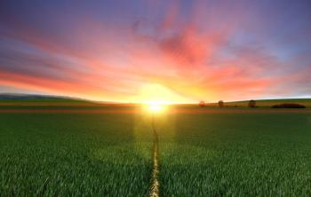 Photography of Footpath Between Green Grass Field during Golden Hour