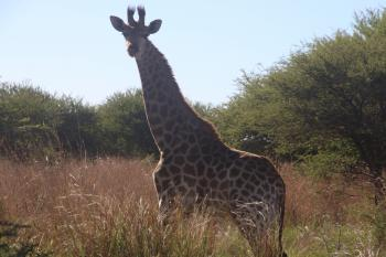 Photography of Giraffe During Daytime