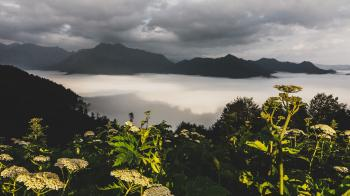 Photography of Green Leaf Plants With Mountain As Background