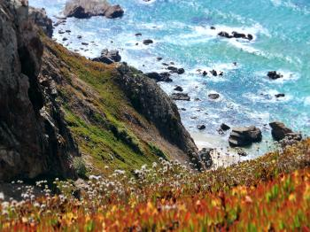 Photography of Orange-and-yellow Petaled Flowers on Cliff Near Body of Water at Daytime