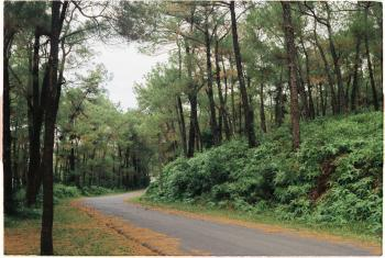 Photography of Road Between Forest