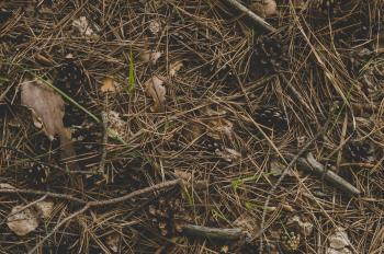 Photography of Twigs on the Ground