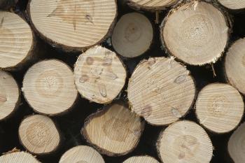 Pile of wood poles