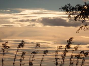 Pine Trees Sunset Silhouette