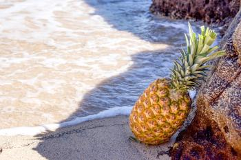 Pineapple in Seashore Leaning on Brown Rock