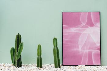 Pink and White Abstract Painting Near Green Cactus