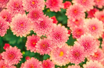 Pink and Yellow Petaled Flower Photo