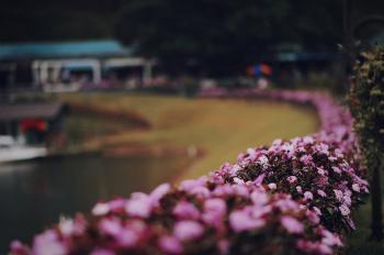 Pink Flowers Bush Selective Focus Photo