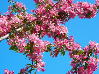 Pink Flowers on Tree Branch during Daytime