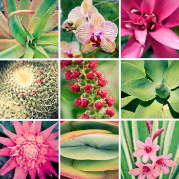 Pink Fower and Plant Collage