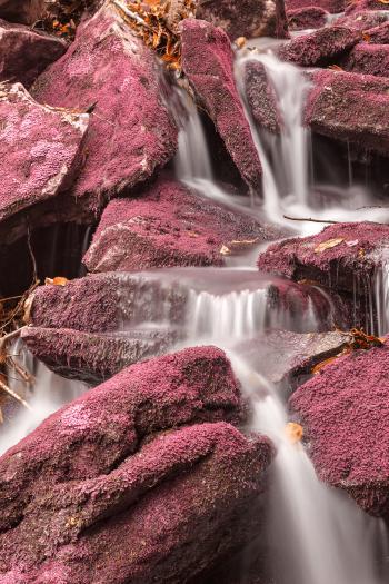 Pink Moss Waterfall