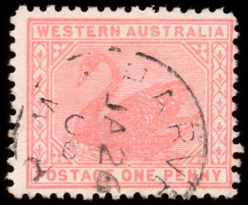 Pink Swan Stamp