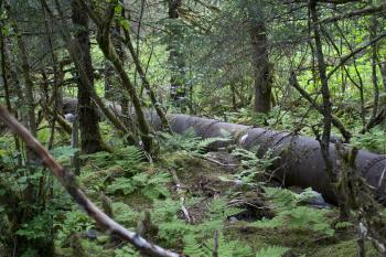 Pipeline through forest